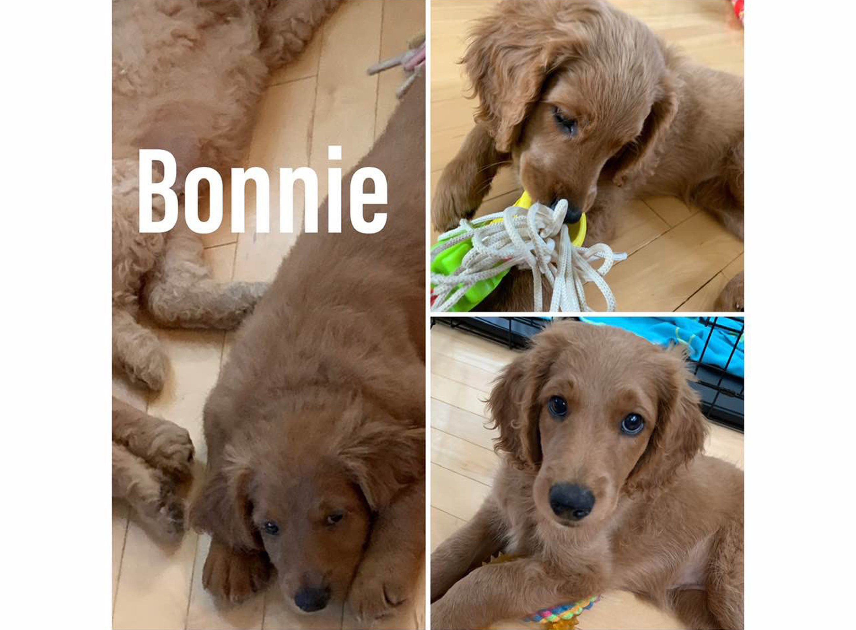 BonnieCollage