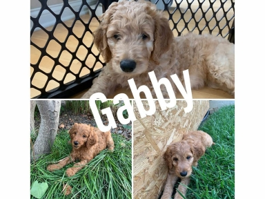 GabbyCollage