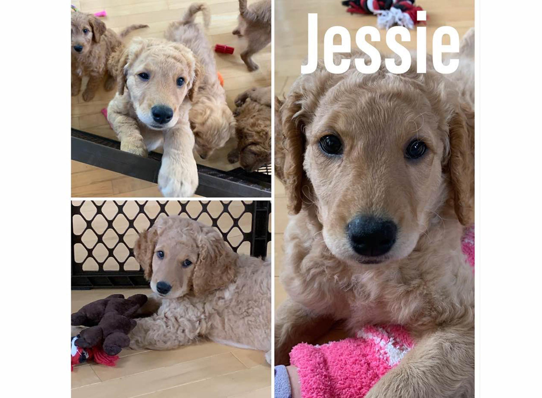 JessieCollage